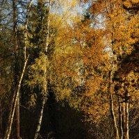 Октябрь :: sergej-smv
