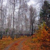 Про дороги и тропинки № 2 :: Мила Бовкун