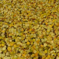 Осенние сердечки)) :: Татьяна