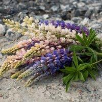 Полевые цветы :: Катя Шерабурко