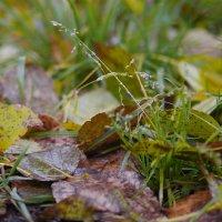 Осенняя листва :: Катя Шерабурко