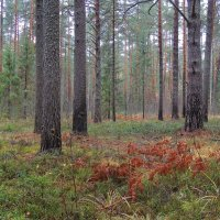 Туманным днем в лесу. :: Павлова Татьяна Павлова