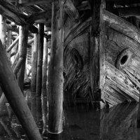 слеза морского волка :: Olga Aristova