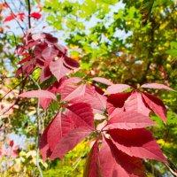 Осень-затейница, пишет такие пейзажи... ))) :: Julia Martinkova