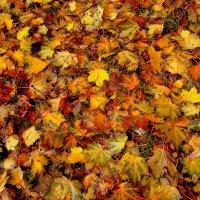 ковер из желтых листьев :: Александр Прокудин