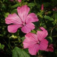 Вот такой нежный цветок отважно цветет в поле в конце октября... :: Galina Dzubina