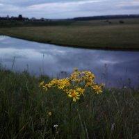 Река и цветы :: Николай Филоненко