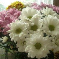 Нежный букет хризантем :: Елена Семигина