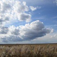 Облака и поле ! :: Татьяна ❧