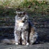 Мы коты люди серьезные, особенно сибирские и в Сибири. :: Валентин Когун