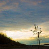 Одинокое деревце :: Людмила Мозер