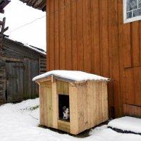 Какм надоел этот мокрый снег! :: Николай Туркин