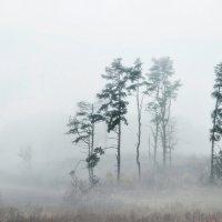 Mолчать в тумане ... :: Rimantas