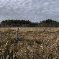 Осень на болоте :: shvlad