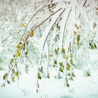 снежок :: Андрей Иванов