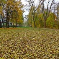 Осень- души очищение... :: Galina Dzubina