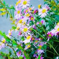 Никогда не надо слушать, что говорят цветы. Надо просто смотреть на них и дышать их ароматом. :: Наталья Александрова