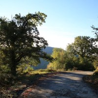 Дорога в лесу :: valeriy khlopunov
