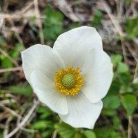 Цветок :: Ксения Паращенко