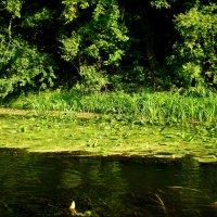 Красивые берега Северского Донца :: Татьяна Пальчикова