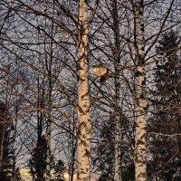 Два огонька :: Валерий Талашов