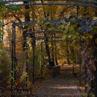 Осень :: Dmitry Swanson