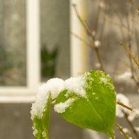 И падал снег ( зависть ) :: Микто (Mikto) Михаил Носков