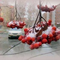 Скоро зима . :: Мила Бовкун