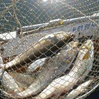 На рыбалке. :: Ирина Королева