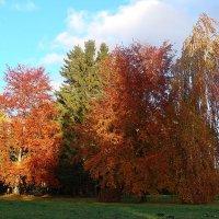Наступила осень :: laana laadas