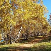 Золото уходящей осени... :: Александр Попов