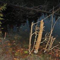На озере ночью. :: Николай Масляев