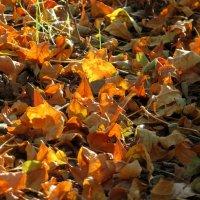Осень :: Наталья Джикидзе (Берёзина)