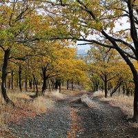 Осень :: Лариса Коломиец