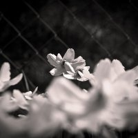 Вальс цветов :: Никита