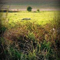 Пейзаж с деревом! :: Владимир Шошин