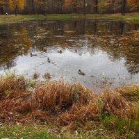 Осень уже без шуток :: Андрей Лукьянов