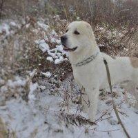 с первым снегом Берк :: alecs tyalin