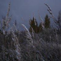 Первый снег :: Сергей Щеглов