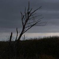 Мертвое дерево :: Сергей Щеглов