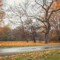 Autumn :: Lasc1vo Артёмин