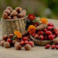 Осенние плоды :: Марина Кит