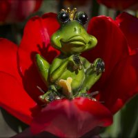 Царица тюльпанов :: Natal&na Фотолюбитель