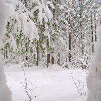 Снег идёт :: Юрий Кузмицкас