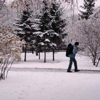Первый снежок :: Сергей Яценко