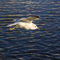 Птица над водой :: Aнна Зарубина