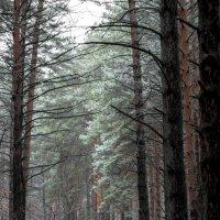 В ближайшем лесу. :: Ольга