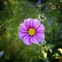 Глубокой осенью цветы... :: Galina Dzubina
