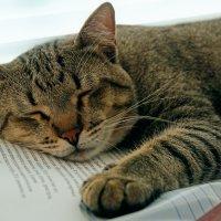 Котенька устал (Хатуль мадан) :: Дмитрий