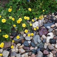И на камнях растут цветы. :: vkosin2012 Косинова Валентина